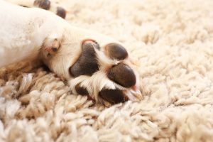Dogs and carpet cleaning