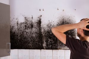 mold growth in kitchen requires mold removal company
